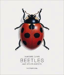 Bernard Durin: Beetles and Other InsectsScherer, Gerhard and Bernard Durin - Product Image