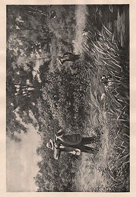 """ORIG B&W SPORTING PRINT/ """"JULY WOODCOCK-SHOOTING""""Frost (Illust.), A.B., Illust. by: A.B.  Frost - Product Image"""