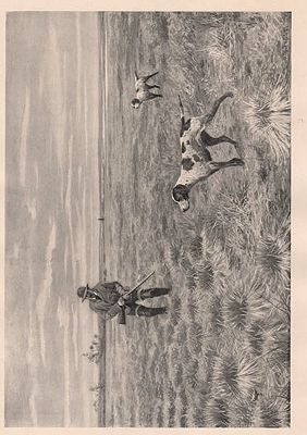 "ORIG B&W SPORTING PRINT/ ""SNIPE-SHOOTING - A TIGHT CARTRIDGE""Frost (Illust.), A.B., Illust. by: A.B.  Frost - Product Image"