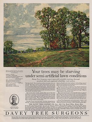 ORIG VINTAGE MAGAZINE AD/ 1926 DAVEY TREE SURGEONS ADillustrator- N/A - Product Image