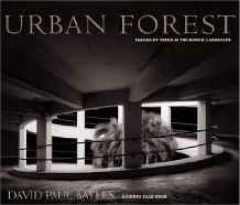 Urban Forest: Images of Trees in the Human LandscapeBayles, David Paul  - Product Image